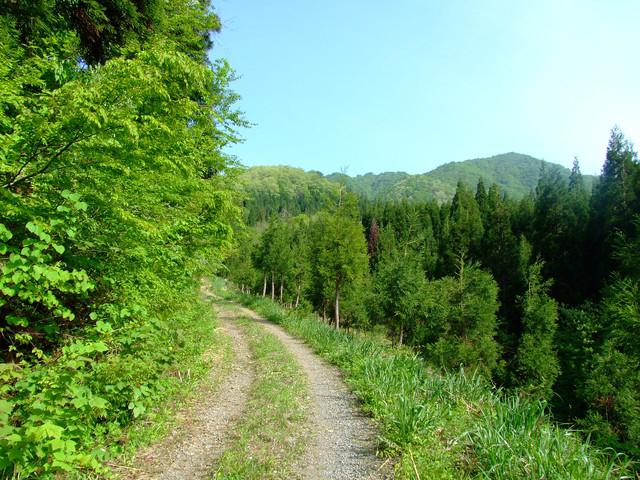 ▲林道を30分以上を走った先に素敵なキャンプ場が待っていることもあります。悪天候後の林道は木が折れて道にはみ出していたり雨水が川のように流れていることも