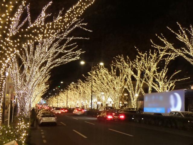 ▲点灯された街路樹が、ズラリ! 温かい電球色のLEDイルミネーションです