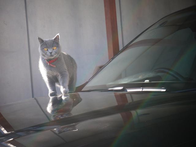 ▲愛猫のルルちゃんも車が大好き!?