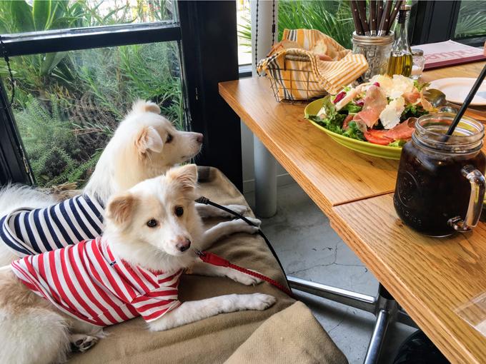 ▲小さめわんこはカフェマットを持っていけば椅子の上もOK