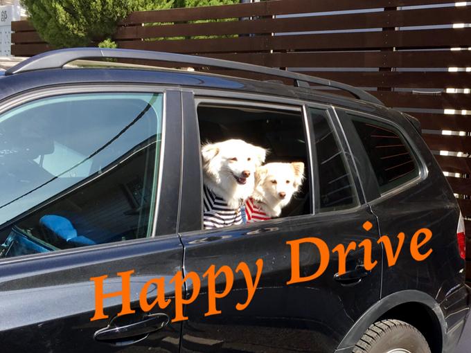 ▲わんこと楽しいドライブを楽しんでください!