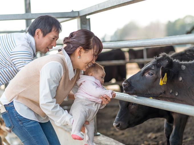 ▲叔父さんご一家は牧場を営んでおり、家の周りにはたくさんの牛舎が。この日は、牛さんとも初対面となった