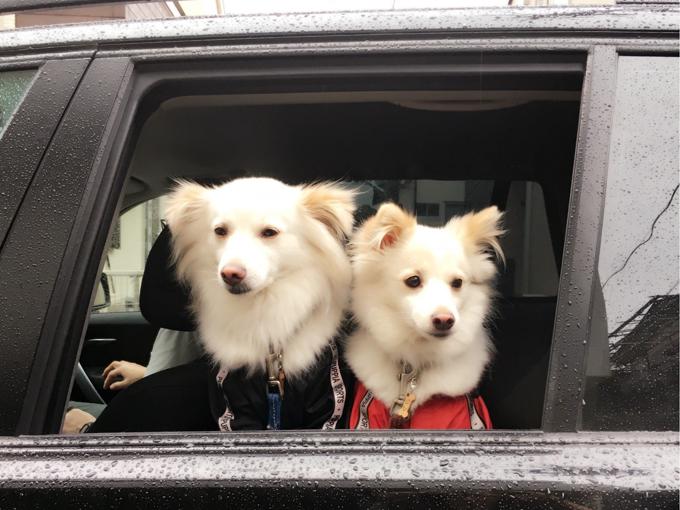 ▲「雨だからお散歩なしかぁ……」と浮かない表情のわんこたち。大丈夫、ちょっと待っててね!