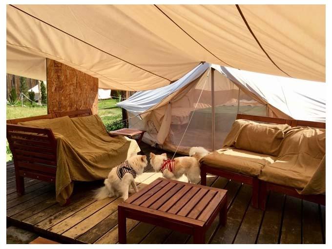 ▲「このテントで寝るのかな」「ベッドもあるね!」グランピング施設内をチェックする、ぐりとぐら