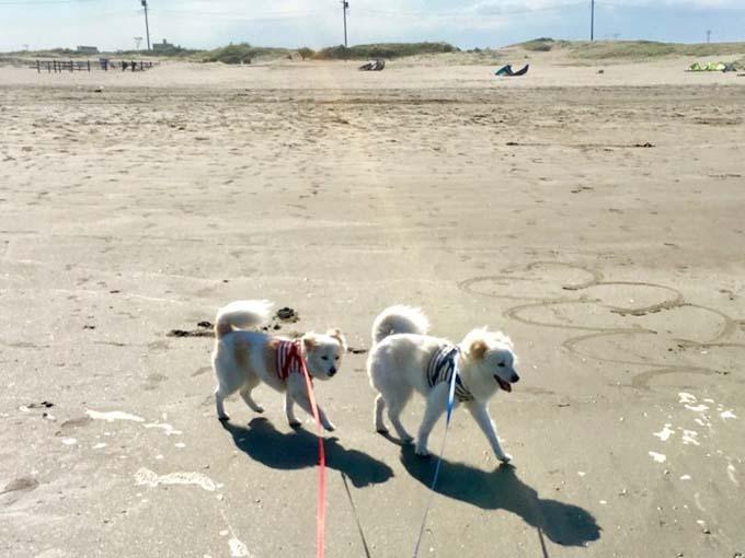 ▲広くて長いビーチは日本じゃないみたい。ぐりぐら、楽しそうに歩きます