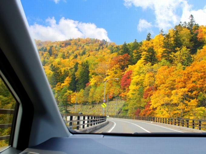 ▲いよいよ始まる紅葉シーズン。ところで、もしも車に乗って紅葉を見に行くならどんな車種を選ぶべきなんでしょうか? オススメのモデルをいろいろ考えてみました!